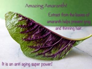 Amazing Amaranth