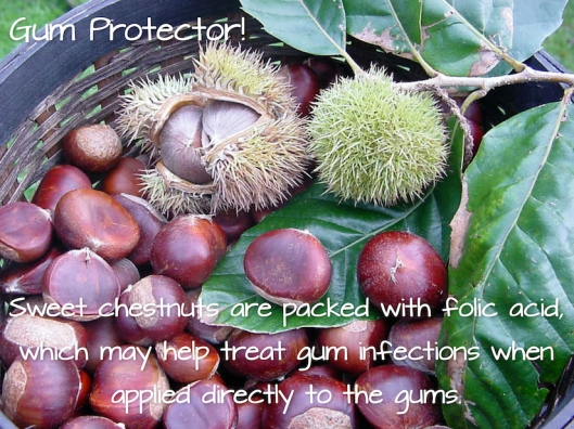 Chestnuts-Gum Protector