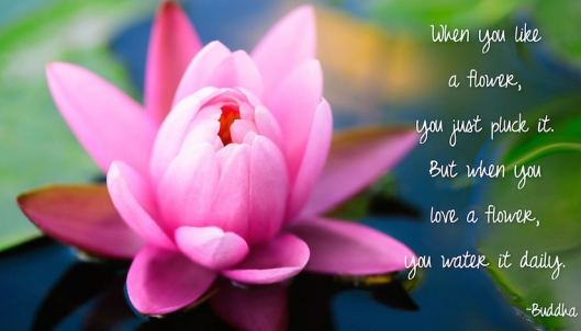 When you Love a Flower-Buddha